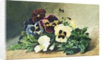 Winter Pansies by Louis Bombled