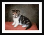 Miss Ann White's Kitten by George Stubbs