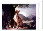 G. M. Johnston's favourite gun dog in a landscape by J. Francis Sartorius