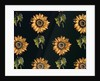 Velours au Sabre: silk decoration of Sunflowers by Maison Ogier and Duplan by French School