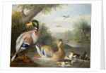 Ducks in a River Landscape by Jakob Bogdani or Bogdany