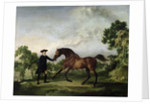 """The Duke of Ancaster's bay stallion """"Blank"""", held by a groom by George Stubbs"""