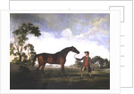"The Duke of Ancaster's bay stallion ""Spectator"", held by a groom by George Stubbs"