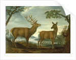 Stag and hind in a wooded landscape by German School