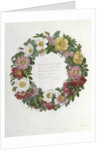 Christmas Roses by Pierre Joseph Redoute