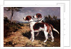 Two Hounds in a Landscape by John Emms