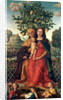 The Virgin and Child with St Anne by Gerolamo dai Libri
