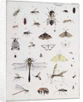 Various insects by Georges Cuvier
