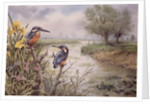 Kingfishers on the Riverbank by Carl Donner