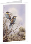 Bee-Eaters by Carl Donner