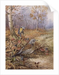 Fieldfare and Blue Tit by Carl Donner