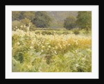 Meadowsweet by Walter Frederick Roofe Tyndale