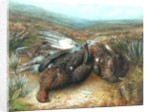 Dead Grouse in Landscape by Unknown Artist