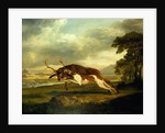 A Hound attacking a stag by George Stubbs