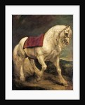 A bridled grey stallion, with a saddle cloth and partially plaited mane: a modello by Anthony van Dyck
