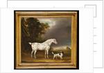 Appaloosa Horse and spaniel, 1807 by Thomas Weaver