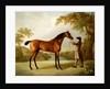 Tristram Shandy, a Bay Racehorse Held by a Groom in an Extensive Landscape, c.1760 by George Stubbs