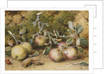 Still Life with Apples, Hazelnuts and Rosehips by William Hough