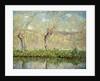 Spring, the Border of l'Epte; Printemps, Bord de l'Epte, 1885 by Claude Monet