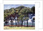 Pines, Cap d'Antibes, 1888 by Claude Monet
