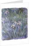 Iris, c.1914-1917 by Claude Monet