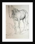 Horse at Coolmore, 1990 by Antonio Ciccone