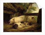 Study of Pigs by George Morland