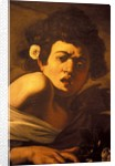 Boy bitten by a lizard, Caravaggio work of art, Palazzo Ducale, Genoa, Ligury, Italy by Anonymous
