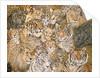 Wild Cat-Spread, 1992 by Ditz Ditz