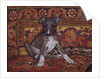 My Whippet Baby, 1994 by Ditz Ditz