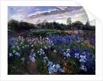 Sunsparkle on Irises by Timothy Easton