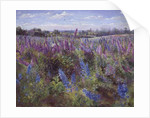 Delphinium Field and Church by Timothy Easton