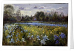 Iris Field in the Evening Light by Timothy Easton