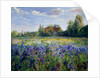 Evening at the Iris Field by Timothy Easton