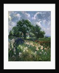 White Barn and Iris Field by Timothy Easton