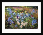 The Iris Bed by Timothy Easton