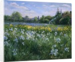 Bonfire and Iris Field by Timothy Easton
