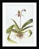 Iris, 1995 by Margaret Ann Eden
