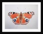 Peacock Butterfly by Ele Grafton