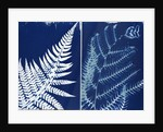 Fern and bracken by Elspeth Ross