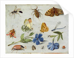 Insects by Jan van the Elder Kessel