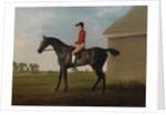 Gimcrack, with John Pratt up, on Newmarket Heath, 1795 by George Stubbs