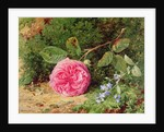 Pink Rose on a Mossy Bank, 1875 by Henry Sutton Palmer