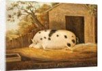 Gloucester Old Spot Pig, 1834 by John Miles of Northleach