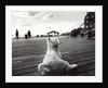 Coney Island Dog, NY, 2006 by James Galloway
