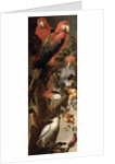 Macaws and Parrots by Frans Snyders or Snijders