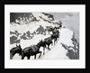 The Mule Pack 1901 by Frederic Remington