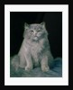 Study of a cat by Lilian Cheviot