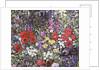 Hedgehog amongst the Flowers by Hilary Jones