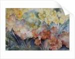 Polyanthus, Mixed Hybrids by Karen Armitage